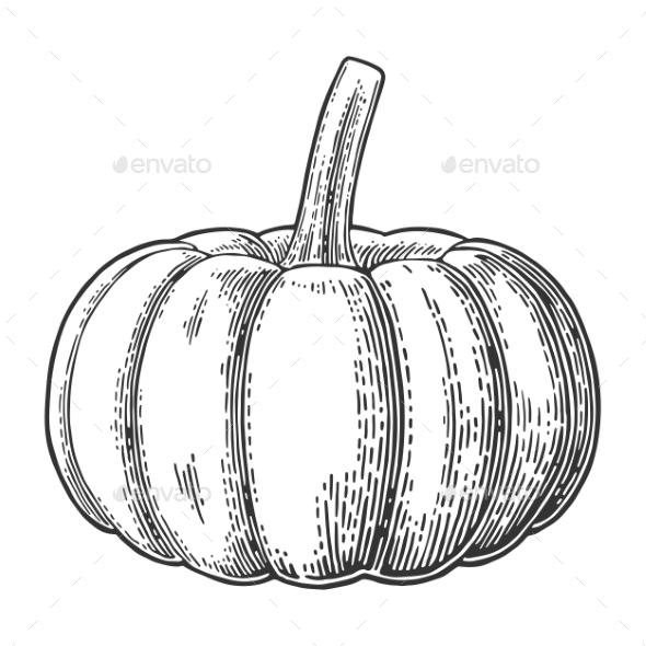 Pumpkin - Organic Objects Objects