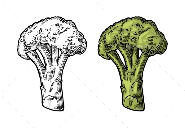 Broccoli - Food Objects