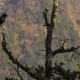 Black Birds in the Tree on Mountains - VideoHive Item for Sale