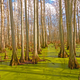 Cypress Swamp in the Sun - PhotoDune Item for Sale