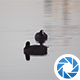 Water Birds - VideoHive Item for Sale