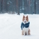 Cute Border Collie Dog on Hind Legs in Winter