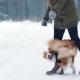 Training Cute Dog in Snowy Winter