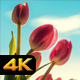 Tulips and Sky - VideoHive Item for Sale