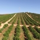 Orange Trees Plantation at May in Portugal, Algarve, Aerial View