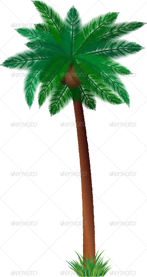 Detailed palm tree - Nature Conceptual