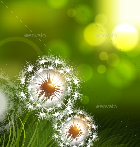 Dandelion Field Vector Spring Background - Organic Objects Objects