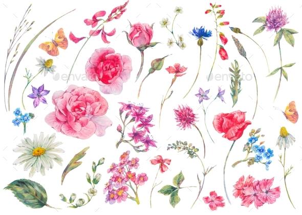 Watercolor Set of Vintage Floral Summer Natural - Nature Backgrounds