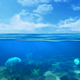 Underwater Seabed View Horizon - VideoHive Item for Sale