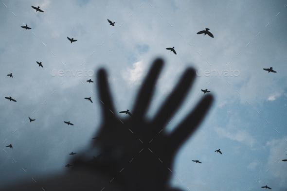 I wish I could join you in the skies. - Stock Photo - Images