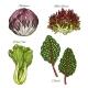 Salads or Leafy Vegetables Vector Icons Set - GraphicRiver Item for Sale