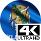 Flag 4K Oklahoma On Realistic Looping Animation With Highly Detailed Fabric - VideoHive Item for Sale