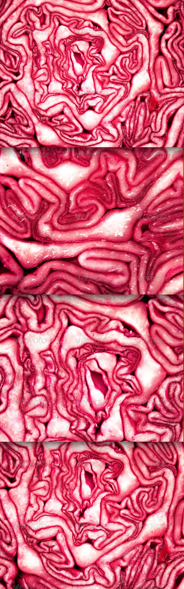 Red Cabbage - Miscellaneous Textures