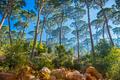 Beautiful forest landscape - PhotoDune Item for Sale