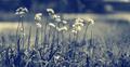 Beautiful gentle wildflowers - PhotoDune Item for Sale