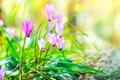 Gentle pink wildflowers - PhotoDune Item for Sale