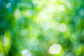 Green bokeh natural background - PhotoDune Item for Sale