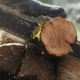 The Woodcutter Cuts Off a Small Tree Trunk - VideoHive Item for Sale