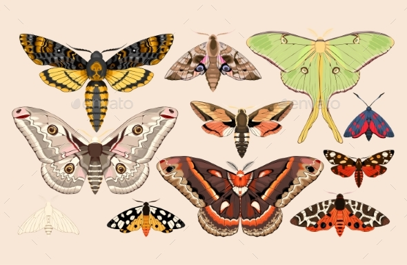 Set of Moths and Butterflies - Animals Characters