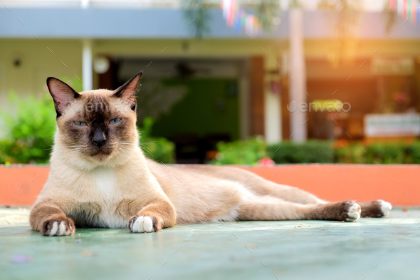 Cat lying on a cement floor - Stock Photo - Images