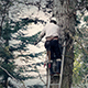 Tree Surgeon Working Up Ladder - VideoHive Item for Sale