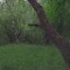 Spring in Botanic Garden - VideoHive Item for Sale