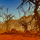 Old Forest In The Desert - VideoHive Item for Sale