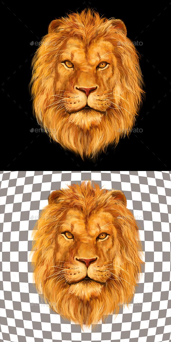 Lion - Animals Illustrations