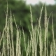 Grass Waving in the Wind - VideoHive Item for Sale