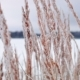 Grass in Winter Wind - VideoHive Item for Sale