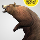 Bear Standing Up 03 - VideoHive Item for Sale