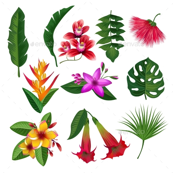 Tropical Plants Hawaii Flowers Leaves and Branches - Organic Objects Objects