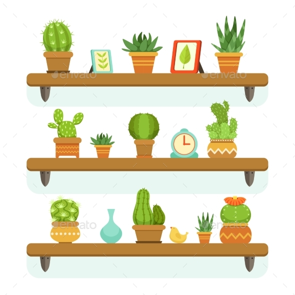 Cactuses in Pots Stand on the Shelves. - Organic Objects Objects