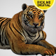 Tiger Relaxing 01 - VideoHive Item for Sale