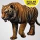 Tiger Walking Loop 02 - VideoHive Item for Sale
