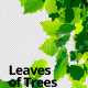 Leaves of Trees 2 - VideoHive Item for Sale