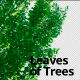 Leaves of Trees 4 - VideoHive Item for Sale