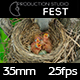 Bird Feeding Chicks - VideoHive Item for Sale