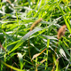 Fresh Green Grass Natural Background - VideoHive Item for Sale