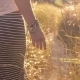 Woman Going Through Ferny Path. Girl Hand Touching Grass. Sun Lens Flares - VideoHive Item for Sale
