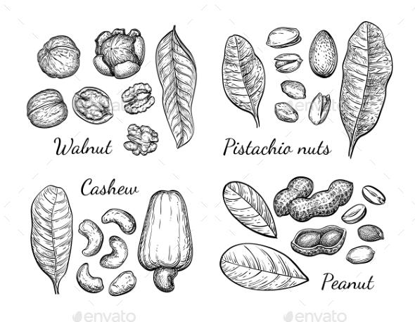 Walnut, Cashew, Pistachio and Peanut - Food Objects