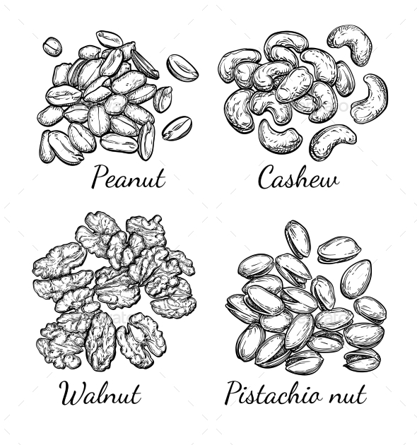 Walnut, Cashew, Pistachio and Peanut - Food Objects