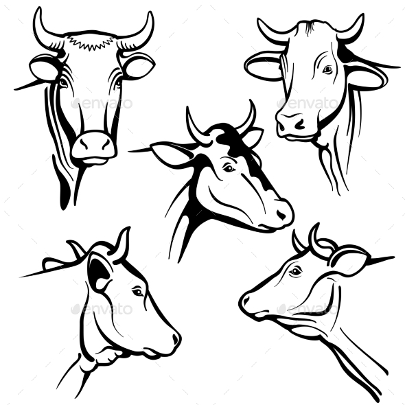 Isolated Cow Head Vector Portraits - Animals Characters