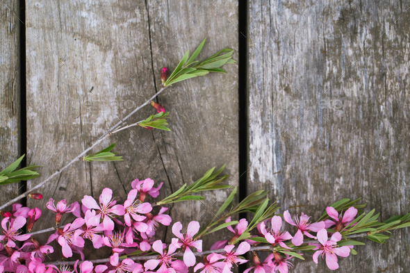 Beautiful spring flowers on old wooden background - Stock Photo - Images