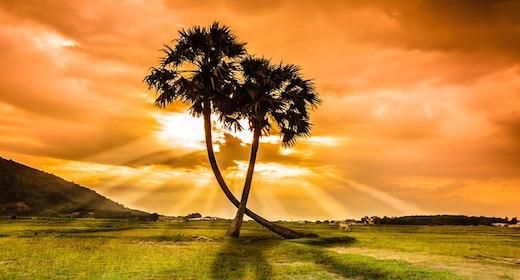 Africa Island Tropical