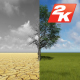 Dry and Green Tree - VideoHive Item for Sale