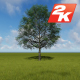 Green Tree - VideoHive Item for Sale