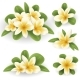 White and Yellow Plumeria Flower - GraphicRiver Item for Sale