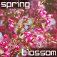 Spring Blossom Nature Background - VideoHive Item for Sale