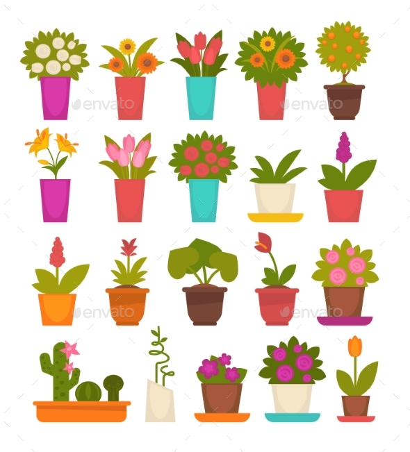 Assortment of Different Flowers - Flowers & Plants Nature